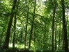 zodiac-beech-woods