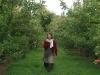zodiac-pilgrimage-orchard